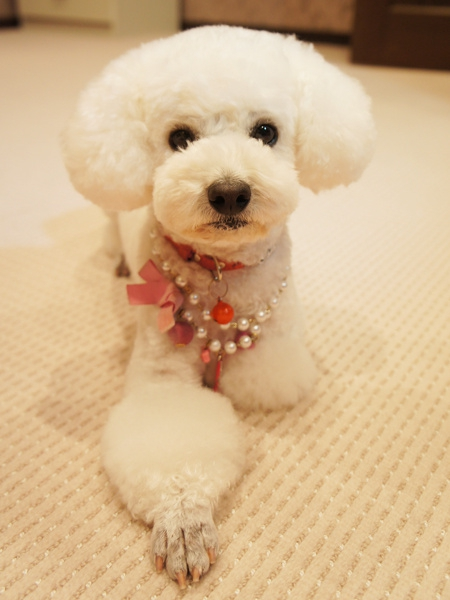 犬のおしゃれなグッズを買うことができるサイト9選!