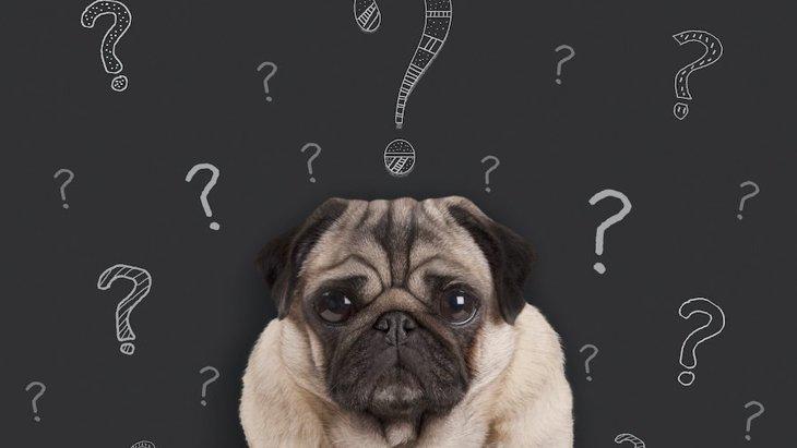 犬のマナーベルトって何?どんな時に使うの?