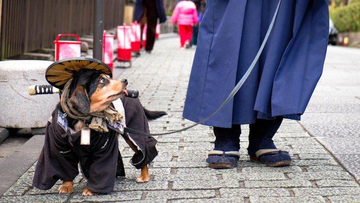 京都のドッグカフェおすすめ15選!犬同伴で食事ができる人気店舗まとめ
