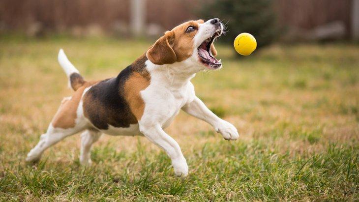 犬を運動させすぎる4つのリスク