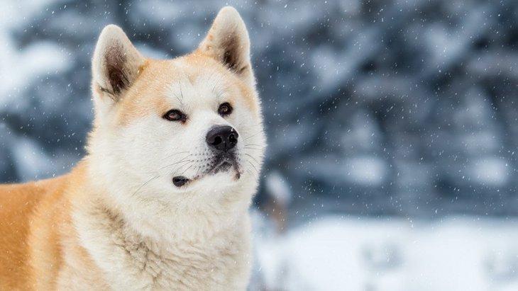 ロシアのプーチン大統領は犬好き!各国からプレゼントされた愛犬たちを紹介