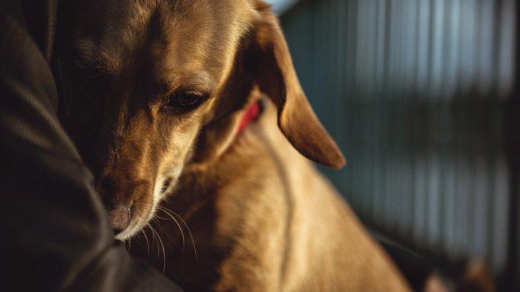 犬の攻撃的行動に最も影響しているのは、犬の怖いという感情【研究結果】