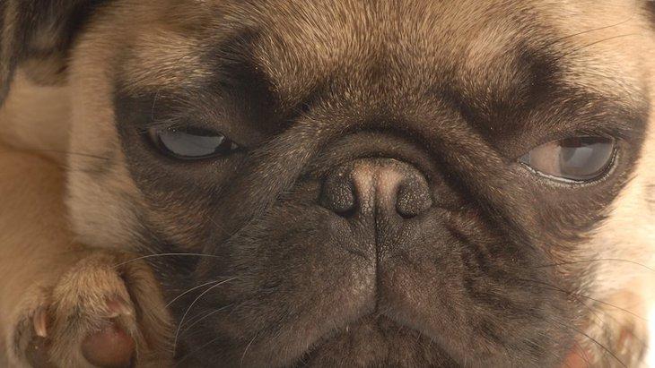 犬の『寂しいサイン』5選