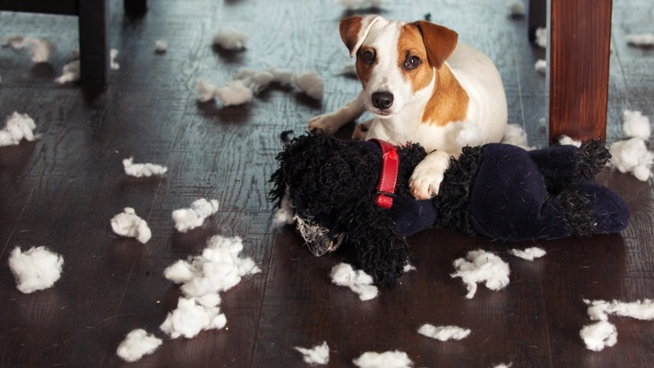 しつけしやすい犬としにくい犬っているの?犬のしつけは難しい!
