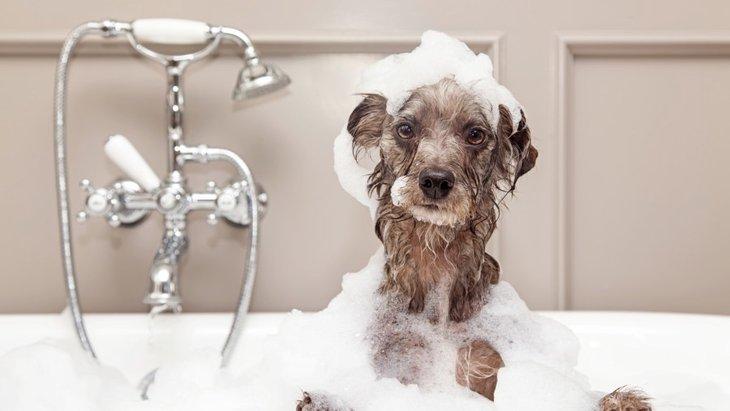 「お風呂が好きな犬」と「嫌いな犬」の違いとは?