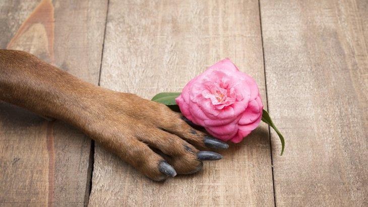 ペットへの「お供え花」について 主な予算や注意点