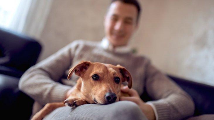 犬が好きな飼い主の身体の場所5選