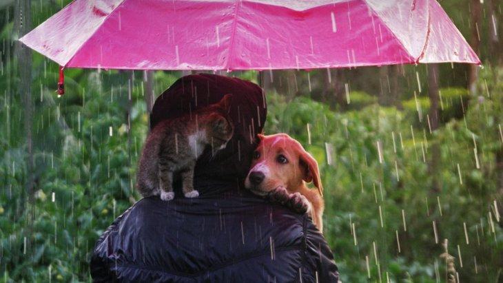 ペットの飼育放棄につながる社会的な要因は何なのだろう?【研究結果】
