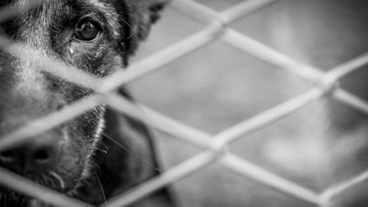 犬の心を傷つけてしまう『絶対NG行為』3選