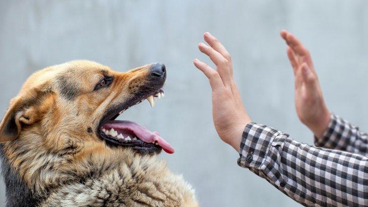 心配性な人は犬に噛まれやすい?