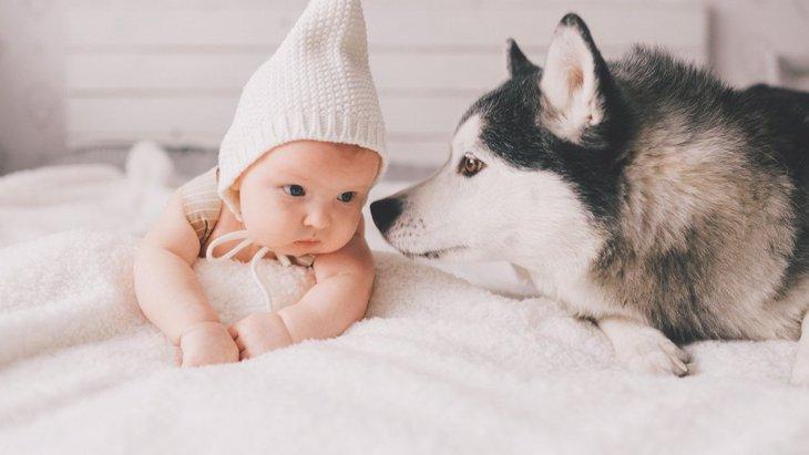 犬が『人間の赤ちゃん』に抱いている感情4選