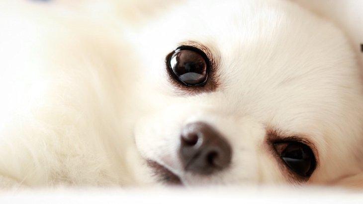 放置してはいけない!犬の目ヤニとそのケアについて