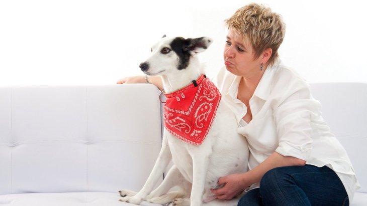 犬が満足できていない時によく見せる態度や行動5選
