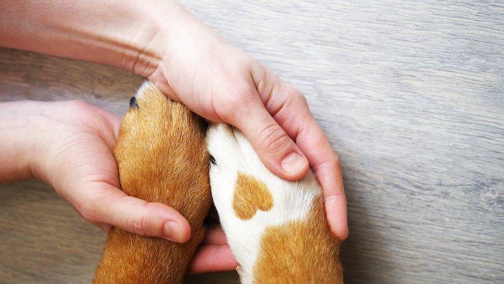 犬の虐待を発見したらどうすればいい?適切な対処法とは?