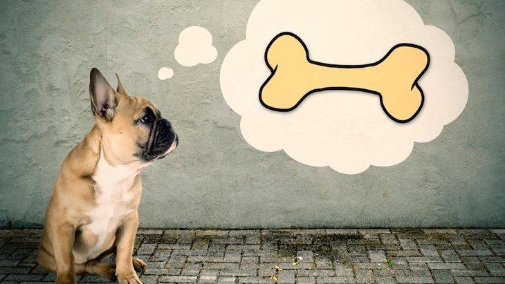 どうして犬は「骨」をしゃぶるのが好きなの?