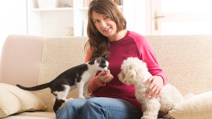 犬と猫の同居でお互いが満足できる遊び方