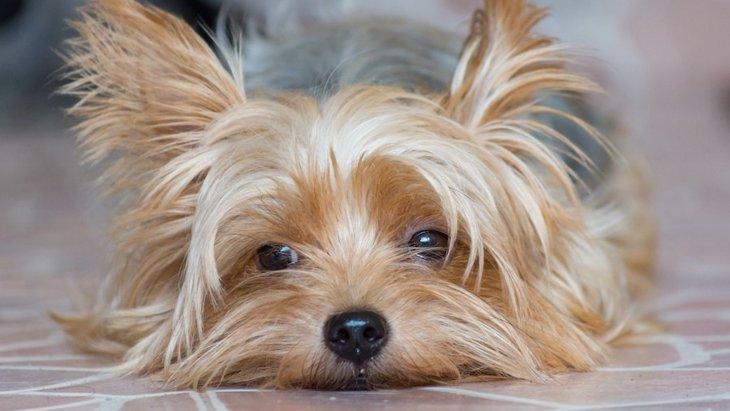 犬に絶対してはいけない『散歩方法』4選