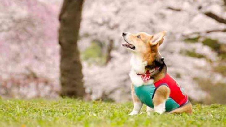 衝撃!海外の動物事情から分かる日本の問題点