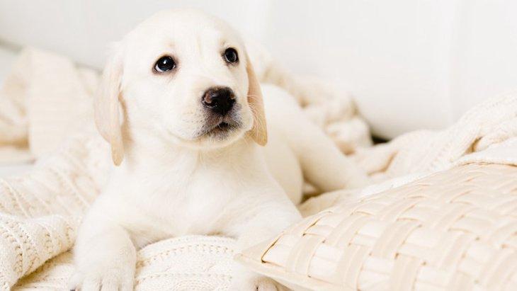 子犬のためのスペースづくりのポイント5つ