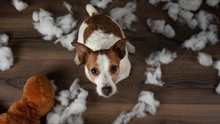 犬が『わがままを言っている時』にする仕草や行動3選