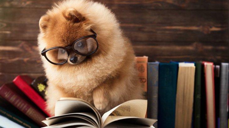 犬の雑学!知らなかったうんちく10連発