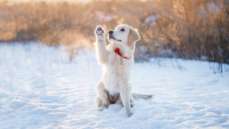 愛犬と雪の日に散歩するときのポイント5つ