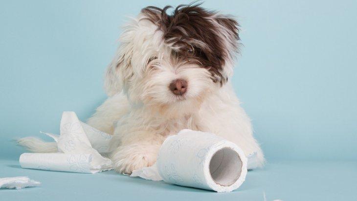 【最も大事な日】子犬を迎えた初日にするべき4つのこと