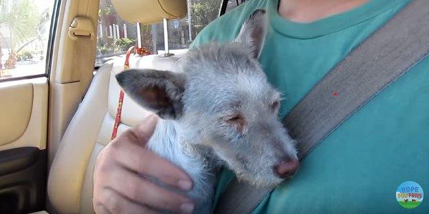 博物館の駐車場に住み着いた「灰色の犬」。保護してシャンプーすると…!