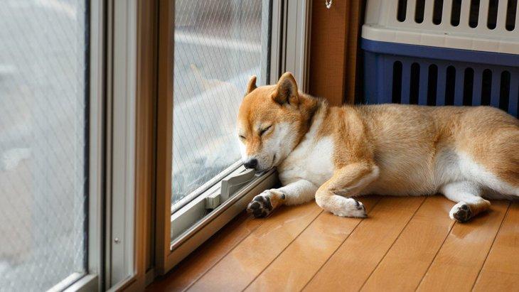 犬が『寝る場所を変える』時の5つの意味