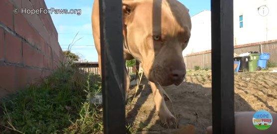 医師一家に置いて行かれた犬は、家屋取り壊し後も留まり待ち続けた