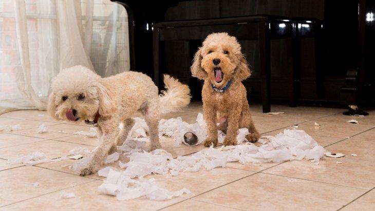 「犬を飼う生活」で飼い主が感じる4つのストレス