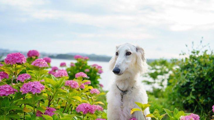 道端に犬のウンチ…処理をしない飼い主さんが減らない4つの理由