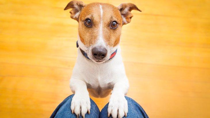 犬のわがままを聞きすぎてしまうことの問題点3選