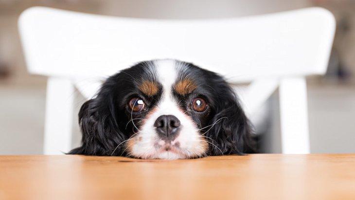 イヌ科の瞳の研究に進化のロマンが見えるかもしれない