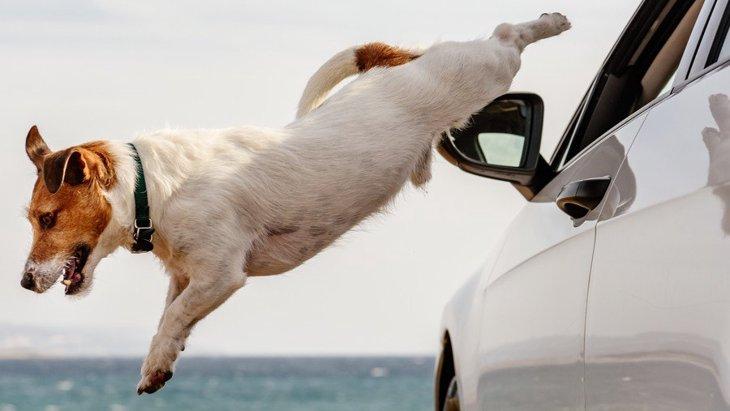 犬が『迷子』になってしまう理由5つ