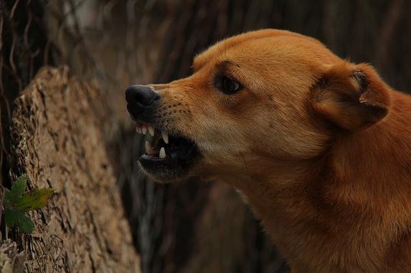 鳴き声に表れる犬の気持ち