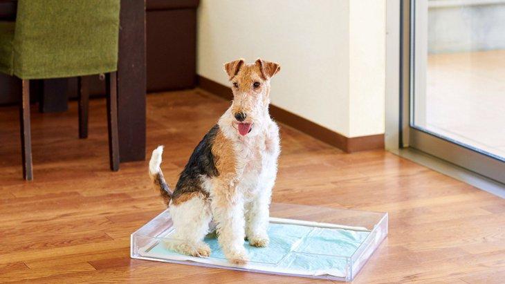 ハイセンス!目立たずおしゃれな犬トイレ「クリアレット2」