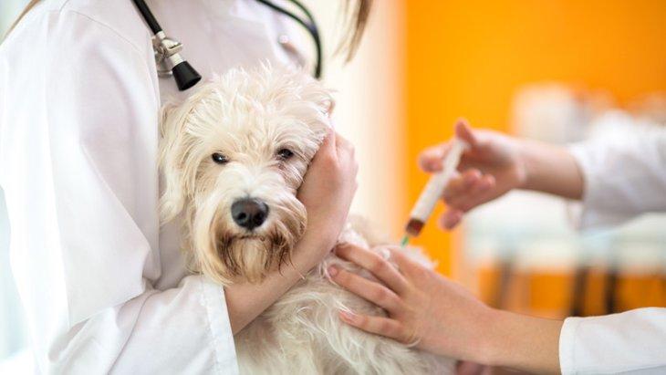狂犬病の防接種の副作用とは?知らないと怖いリスクや症状をチェック!