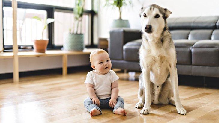 犬と子どもを一緒に遊ばせる時の注意点2つ