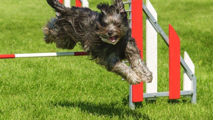 犬の競技会に出たい!まず何をすればいい?
