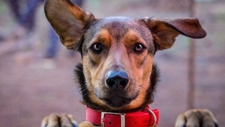 犬にジャンプをさせるべきではない『NGな理由』3選