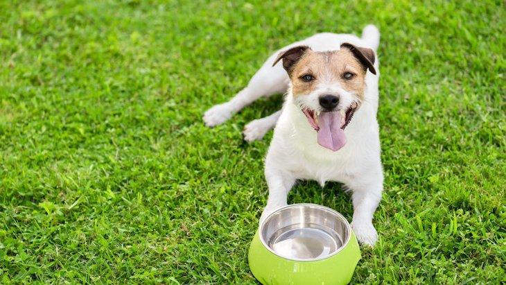 犬がお腹を空かせているときの仕草や行動7つ