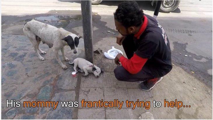 母犬だけでは助けられない負傷した仔犬 誰かの助けが...