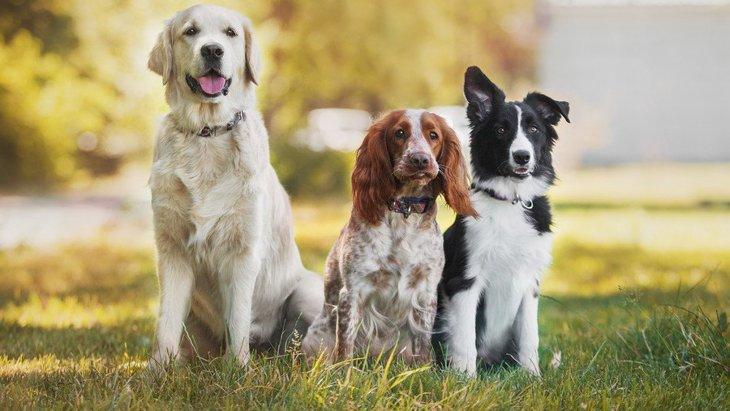 小型犬より大型犬の寿命が短い理由とは?