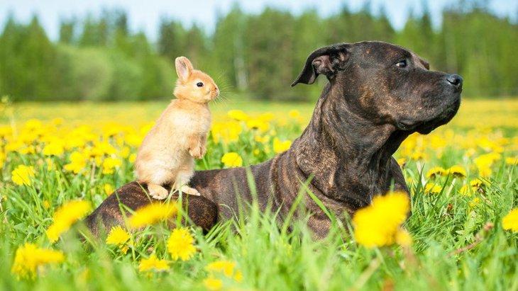 犬と一緒に飼っても安全なペット!ベスト5選