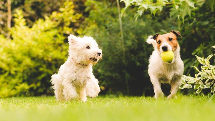 社交的な犬が見せる4つの仕草や行動