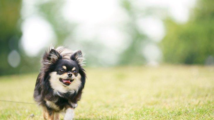 みんなはどうしてる?犬の『お散歩コース』は毎回変えるべき?