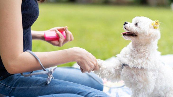 犬が言うことを聞かなくなる飼い主の『勘違い行為』5選