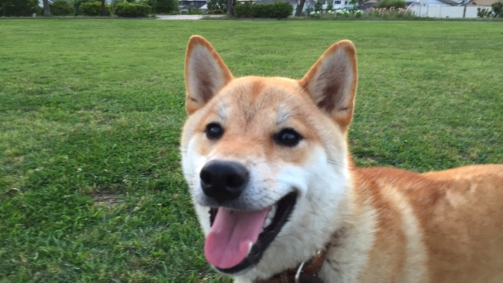 定期的な散歩が犬のストレスを下げる秘策となる