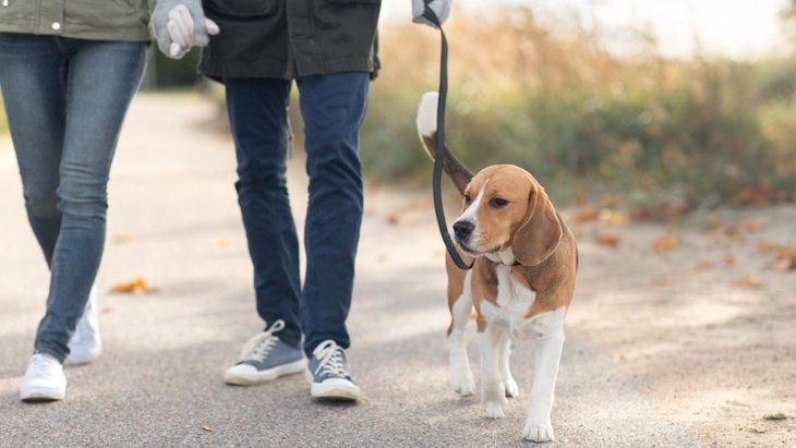 犬の危険な『歩き方』5選!普段と違う動きをしていたら病気も疑って!